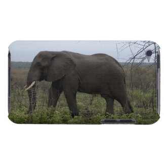 African Elephant, Wildlife, Wild Animal iPod Touch Cases