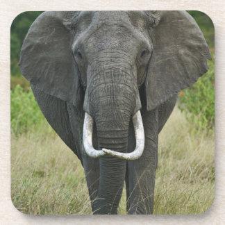 African Elephantna loxodonta, Masai Mara Game Drink Coaster
