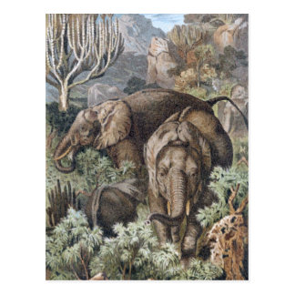 AFRICAN ELEPHANTS in the jungle Postcard