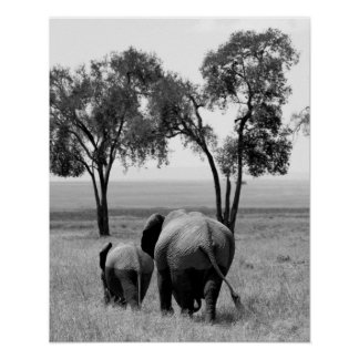 African Elephants in the Masai Mara, Kenya Poster