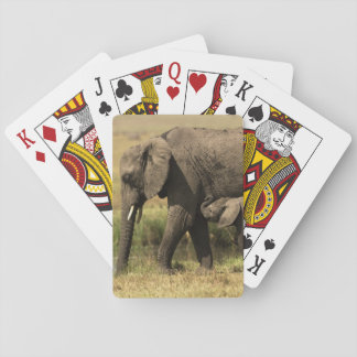 African Elephants Playing Cards