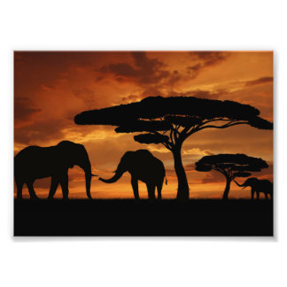 African elephants silhouettes in sunset photo art