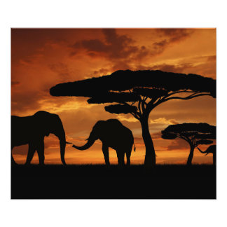 African elephants silhouettes in sunset photograph