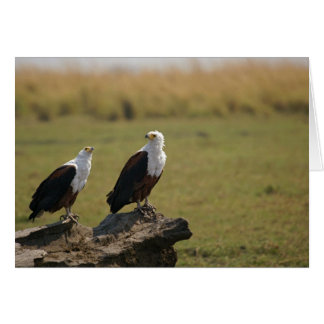 African Fish Eagles Card