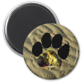 African Footprint Stare of A Lion I Fridge Magnets
