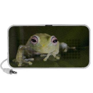 African Glass Frog, Hyperolius viridiflavus, iPhone Speaker