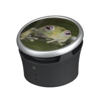 African Glass Frog, Hyperolius viridiflavus, Speaker