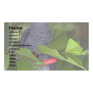 African gray parrot business card template