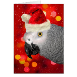 African Gray Parrot in a Santa Hat Blank Note Card
