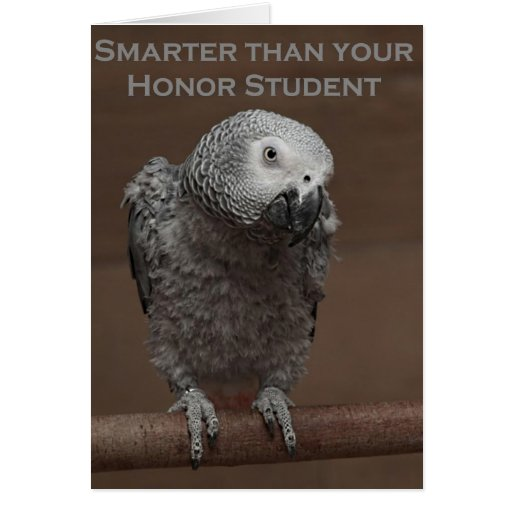 African Gray Parrot Smarter Than Your Honor Studen Cards