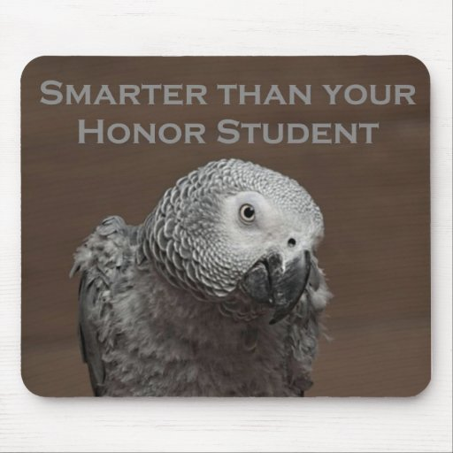 African Gray Parrot Smarter Than Your Honor Studen Mousepad