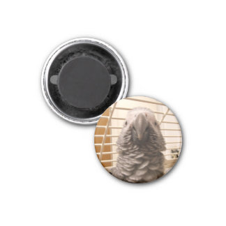 African Grey Parrot 3 Cm Round Magnet
