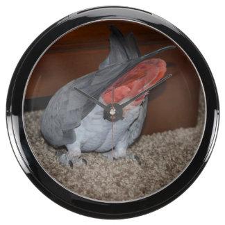African Grey Parrot Aquarium Clock