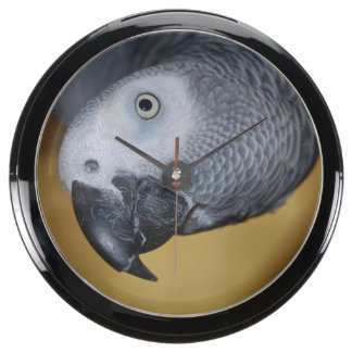 African Grey Parrot Fish Tank Clocks