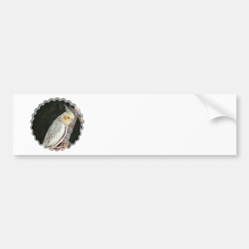 African Grey Parrot Bumper Stickers