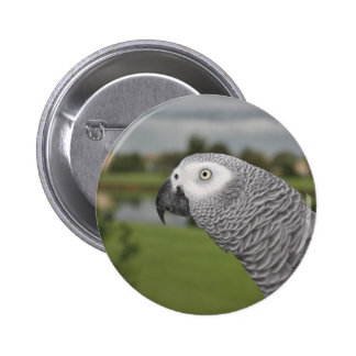 African Grey Parrot by Lake Button