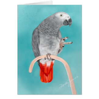 African Grey Parrot Cards
