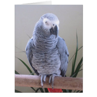 African Grey Parrot Greeting Cards