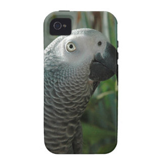 African Grey Parrot Case-Mate iPhone 4 Cases