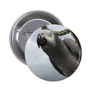 African Grey Parrot Close-up Buttons