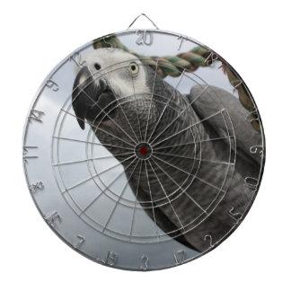 African Grey Parrot Close-up Dartboard With Darts
