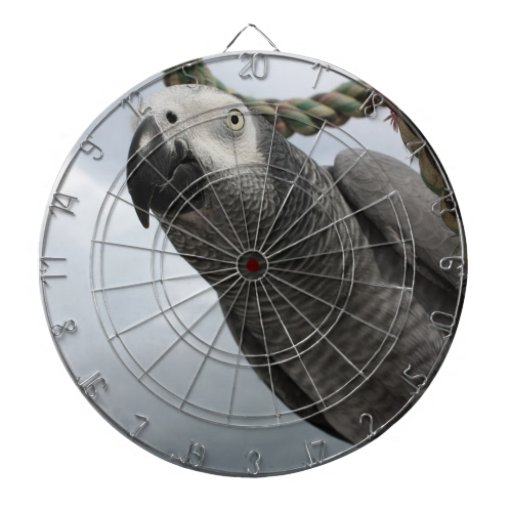 African Grey Parrot Close-up Dartboard With Darts