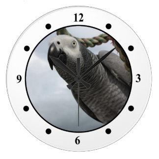 African Grey Parrot Close-up Wall Clock