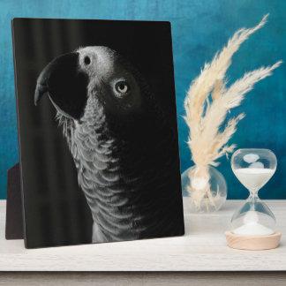 African Grey Parrot Display Plaque