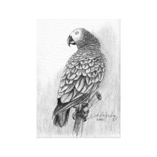 African Grey Parrot Fine Art Canvas~CHSTudios.net Canvas Print