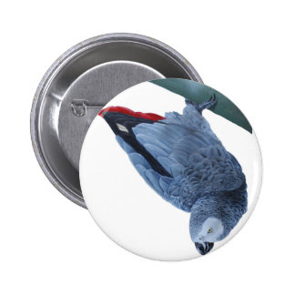 African grey parrot gifts pins