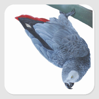 African grey parrot gifts sticker