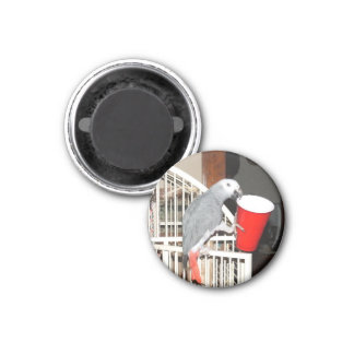 African Grey Parrot holding a cup 3 Cm Round Magnet
