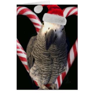 African Grey Parrot Holiday Season Card