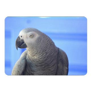 African Grey Parrot 13 Cm X 18 Cm Invitation Card