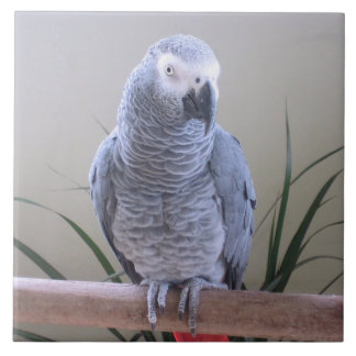 African Grey Parrot Large Square Tile