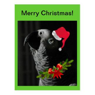 African Grey Parrot Merry Christmas! Postcard