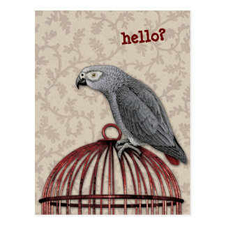 African Grey Parrot on Red Birdcage Postcard