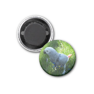 African Grey Parrot Outside 3 Cm Round Magnet