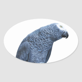 African Grey Parrot Oval Sticker
