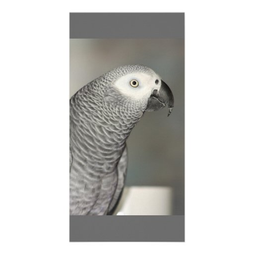 African Grey Parrot Photo Card Template