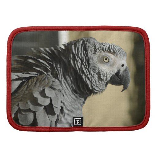 African Grey Parrot Organizer