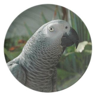 African Grey Parrot Dinner Plate