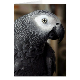 African Grey Parrot Portrait Blank Greeting Card
