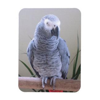 African Grey Parrot Rectangular Photo Magnet