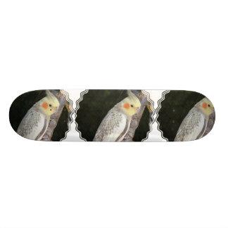 African Grey Parrot Skateboard
