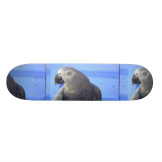 African Grey Parrot Skate Board Decks