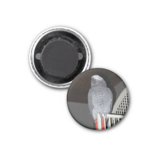 African Grey Parrot Sleeping 3 Cm Round Magnet