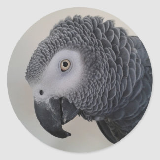 African Grey Parrot Stickers