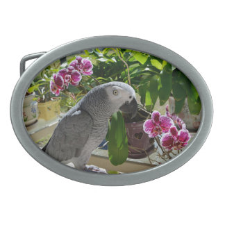 African Grey Parrot with Orchids Belt Buckle