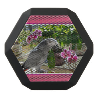 African Grey Parrot with Orchids Black Boombot Rex Bluetooth Speaker